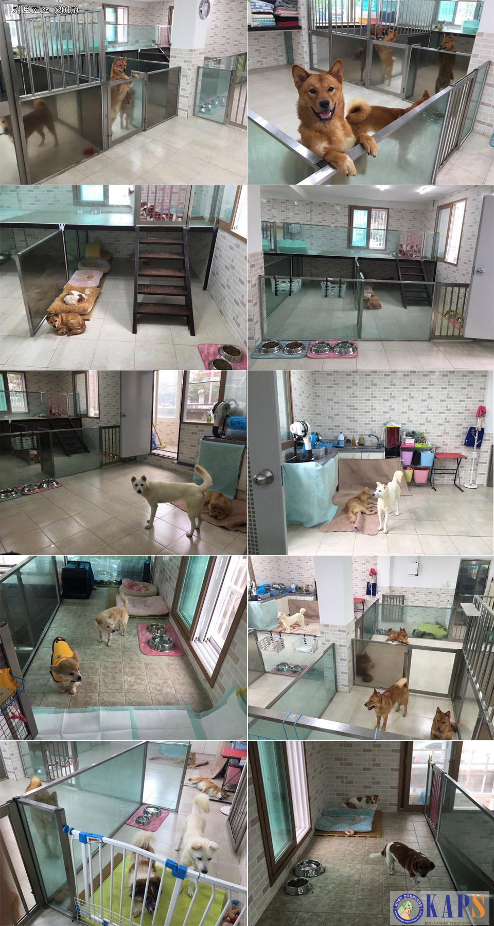 dog_shelter.jpg
