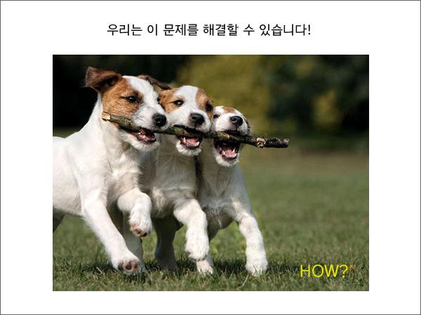 neu_spay05.jpg