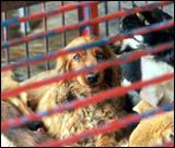 dogmarket_dogs02.jpg