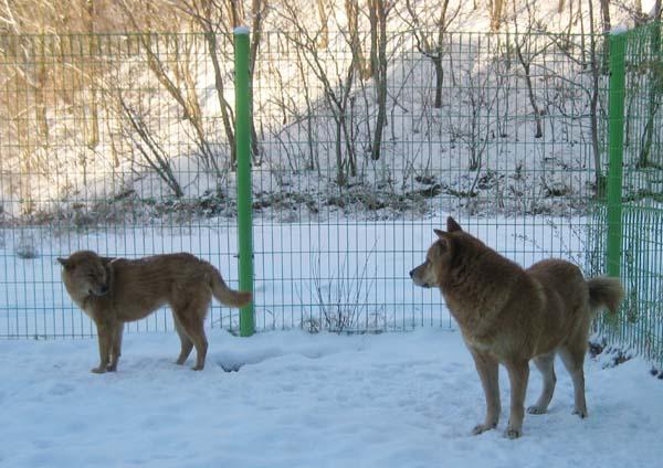snow009.jpg
