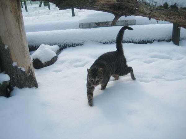 snow027.jpg