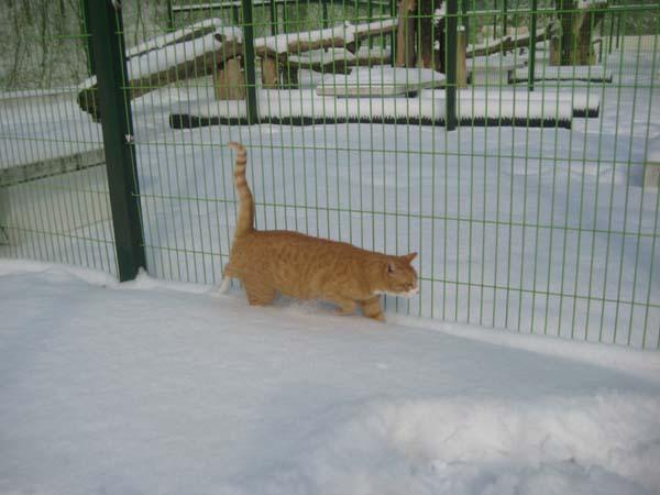 snow030.jpg