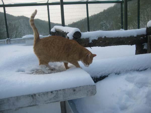 snow034.jpg