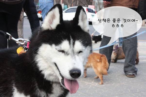 0305dogwalking098s.jpg